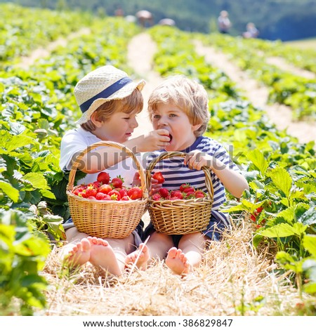 Two adorable little friends, kid boys having fun on strawberry farm in summer. Chidren eating healthy organic food, fresh berries. Happy twins.