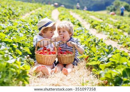 Two adorable little friends, kid boys having fun on strawberry farm in summer. Children eating healthy organic food, fresh berries. Happy twins.