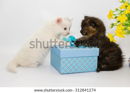 Two adorable little kittens sitting together on a white studio background - stock photo