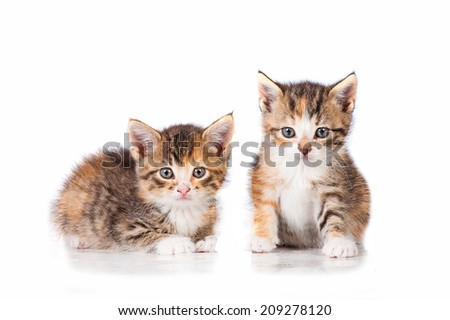 Two adorable little tabby kittens - stock photo