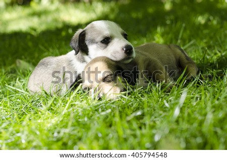 Two adorable mixed breed puppies sleeping in the grass. - stock photo
