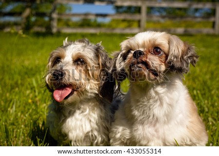 Two adorable mutts sitting side by side in green grassy field