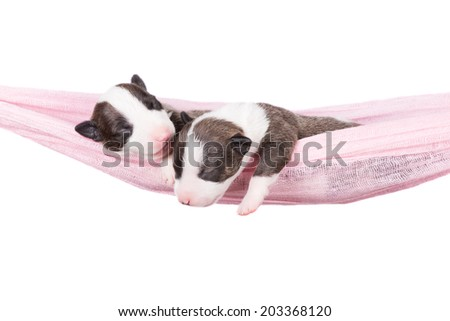 two adorable puppies in a hammock - stock photo