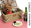 Two adorable yorkies on a picnic with wine and dog bisquits - stock photo