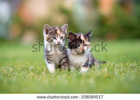 two adorable young cats in the grass