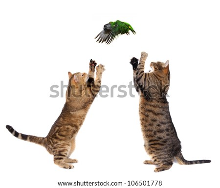 Two adult cats catching bird, isolated on white - stock photo