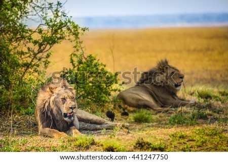 Two african males in grasslands Zambia - stock photo