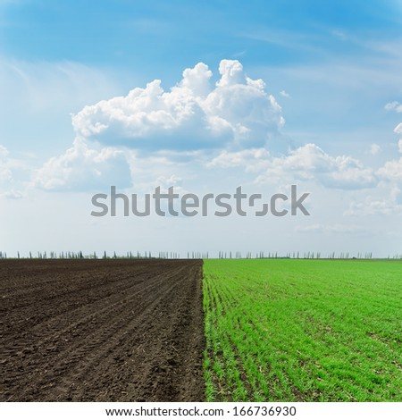 two agriculture fields under cloudy sky - stock photo