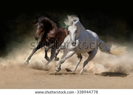 Two andalusian horse in desert dust against dark background - stock photo
