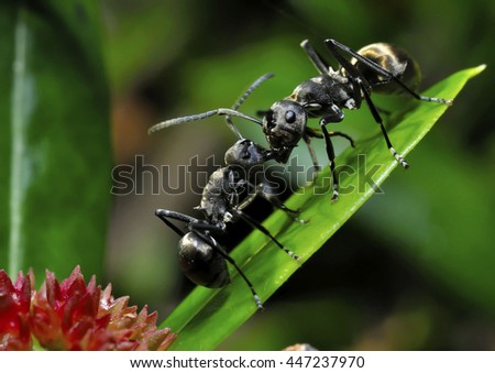 Two ants on a leaf - stock photo