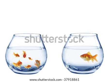 two aquaria's from fish on white background