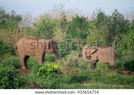 two asian elephants relaxing in morning sun light. - stock photo