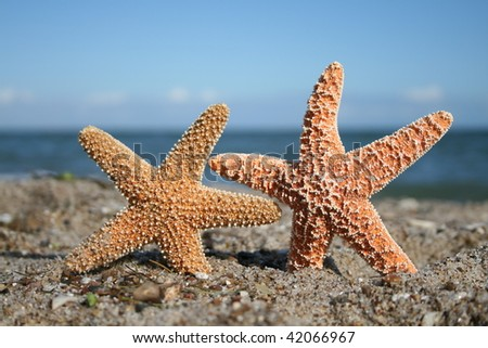 Two at the Beach - stock photo