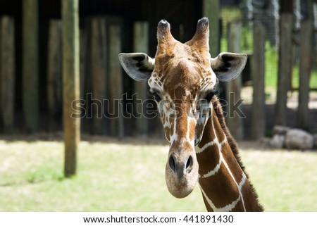 Two baby giraffe in the zoo and blurry background. - stock photo