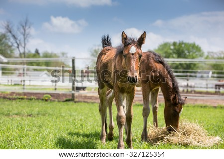 Two baby Horses