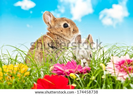 two baby rabbits in a flower field with blue sky