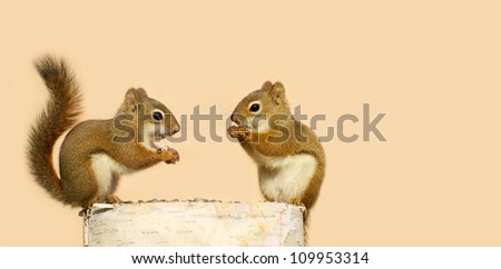 Two baby squirrels happily perched on a log sharing sunflower seeds on a neutral background with copy space.  - stock photo