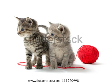 Two baby tabby kittens with red ball of yarn on white background - stock photo