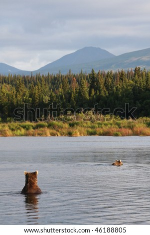 Two bears fishing for salmon