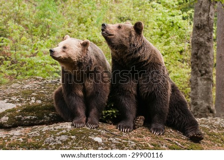 Two bears sitting on the rock, facing camera left.