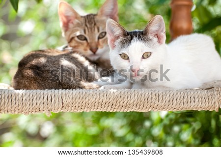 Two beautiful Kittens sat on a chair looking at the camera - stock photo