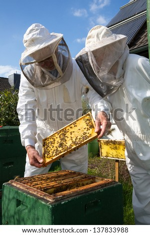 Two beekeepers maintaining beehive to ensure health of the bee colony or honey harvest