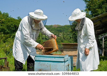 Two beekeepers work on an apiary. Summer, sunny day.