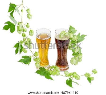 Two beer glasses with lager and dark beer and hanging branches of hops with leaves and cones on a light background