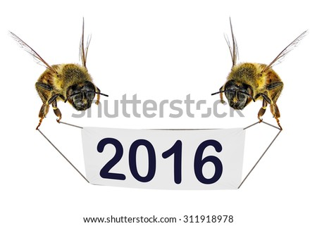 Two bees holding a blank sign (banner) with figures of two thousand sixteen isolated on the white background - stock photo