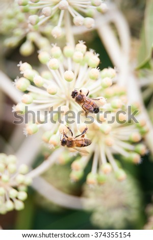 Two bees on flower in the garden - stock photo