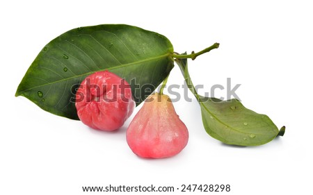 Two Bell-Fruits with leaves on white isolated background, Bell-Fruit with leaves, Jamrul or Jambu on isolated background - stock photo