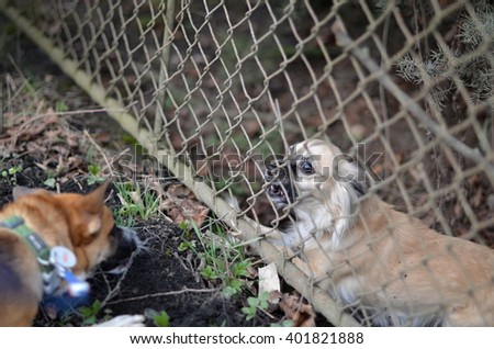 two belligerent dogs  - stock photo