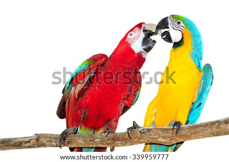 Two big parrots, couple of beautiful macaws Isolated on white background