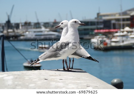 Two birds at The Victoria & Albert Waterfront in Cape Town, South Africa - stock photo