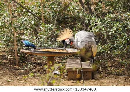 two birds eating at the feed box - stock photo
