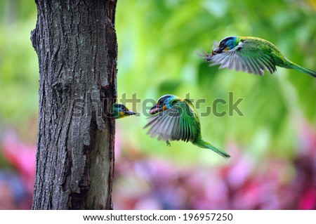 Two birds flying, one bird in a hole in a tree. - stock photo