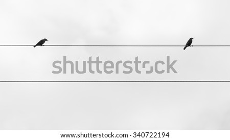 Two birds on the wire  of electricity - stock photo
