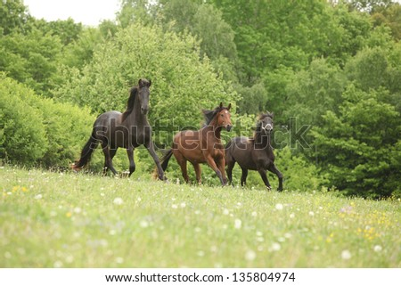 Two black and one brown horses running in nature with some trees on the background - stock photo