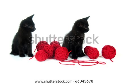 Two black kittens with balls of red yarn on white background