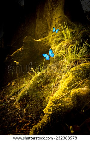 two blue butterflies in a magic forest - stock photo
