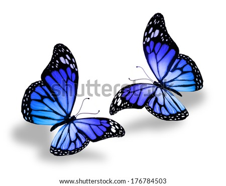 Two blue butterflies, isolated on white background