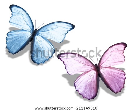 Two blue pink butterfly, isolated on white - stock photo