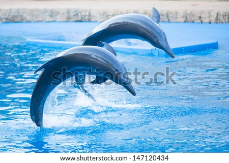 Two bottlenose dolphins jumping in formation in an aquarium - stock photo