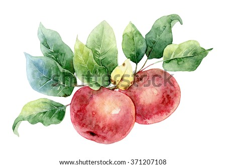 Two bright red watercolor apples on a branch with leaves. Watercolor illustration - stock photo