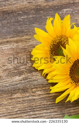 two bright sunflowers   on wooden table background - stock photo