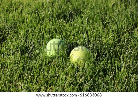 Two bright tennis balls in green grass