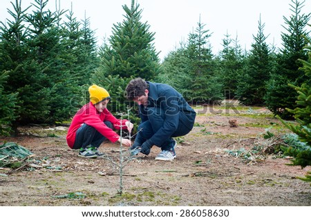 two brothers having fun at a cut your own christmas tree farm - stock photo