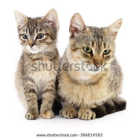 Two brown cats on a white background.