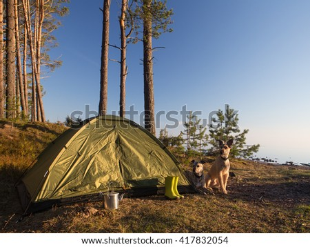 two brown dogs in a campaign by the lake, sit near tent on a background of pine trees, near the tents are boots and a kettle