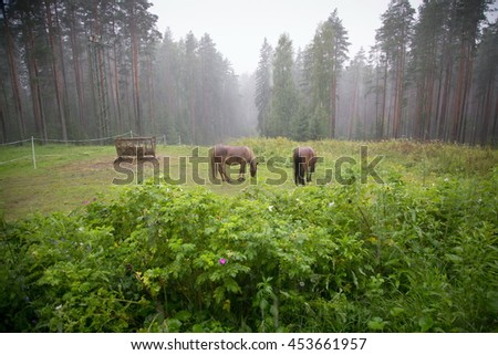 Two brown horses on meadow in a forest